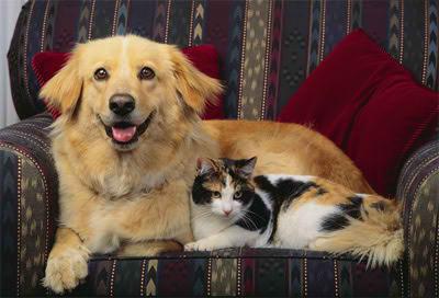 Resultado de imagen para perros gatos