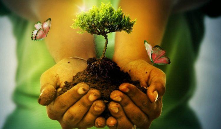 Israel Y La Protecci N Del Medio Ambiente