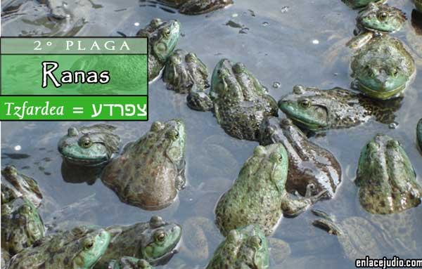 La 2 plaga de egipto tzfardea ranas enlace jud o for Que significa estanque