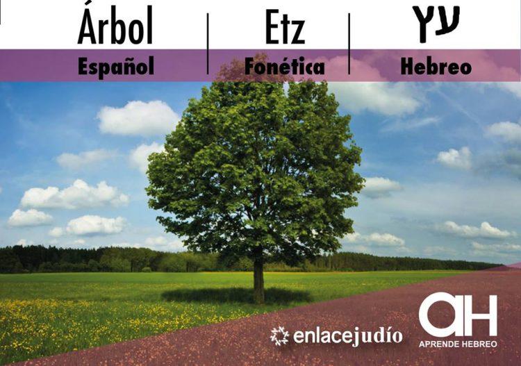 Etz rbol la palabra en hebreo del d a for Significado de la palabra arbol