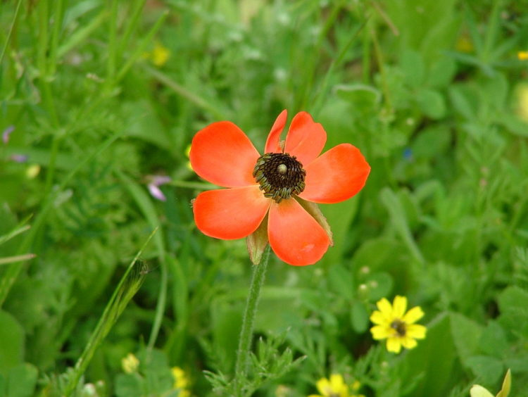 La palabra judía del día: Péraj/Flor