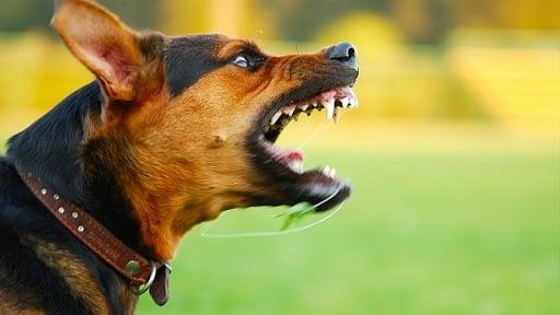 Tiro al aire / Mi diablo, el perro que no muerde