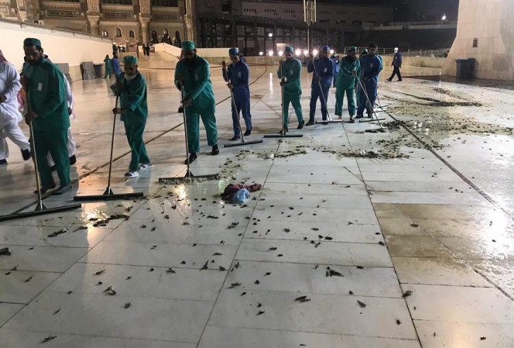 Plaga de langostas infesta el sitio más sagrado para los musulmanes