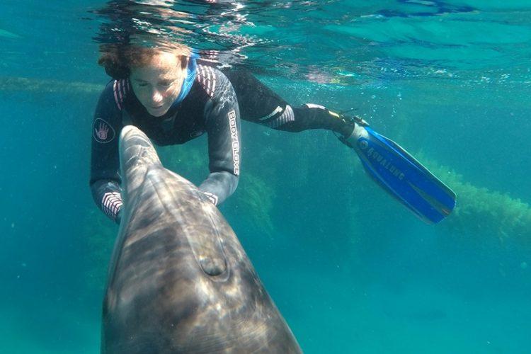 Investigación de la Universidad Ben Gurión arroja nueva luz sobre la memoria de los delfines