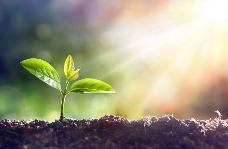 ¿Cómo cultivar la tierra de Israel? Enseñanza de Tu Bishvat