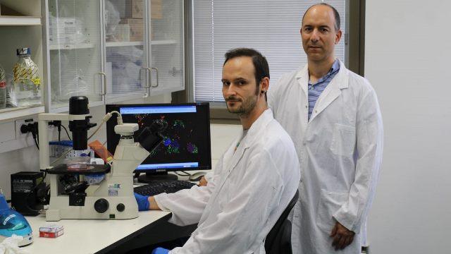 Científicos de Israel descubren un prometedor tratamiento para tumores cerebrales