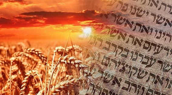 Shavuot: El judaísmo es un pacto. Este sábado por la noche celebraremos la fiesta de la entrega de la Torá